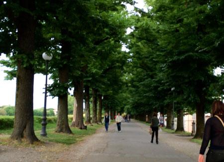 Lucca2014_StudentessaMatta58