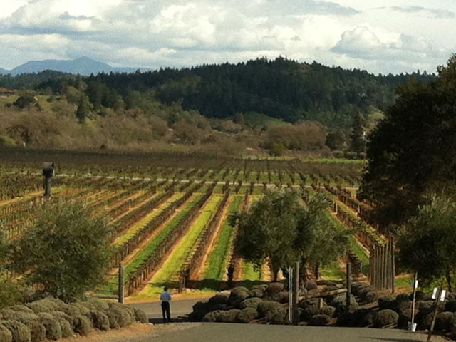 battaglini-winery-sonoma-california-joe-battaglini-proprietario-lucca