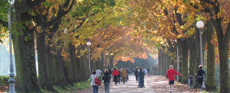 Lucca_wallwalk