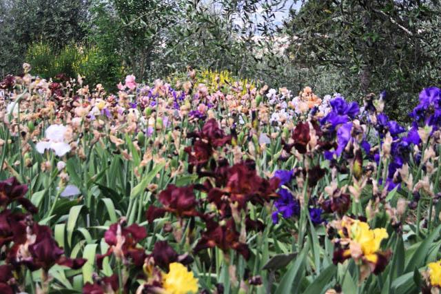 primi-indizi-di-primavera-first-signs-spring-nuova-vita-uccelli-fiori