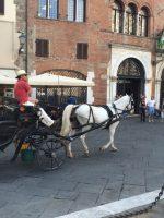 Ciao_Lucca_StudentessaMatta1