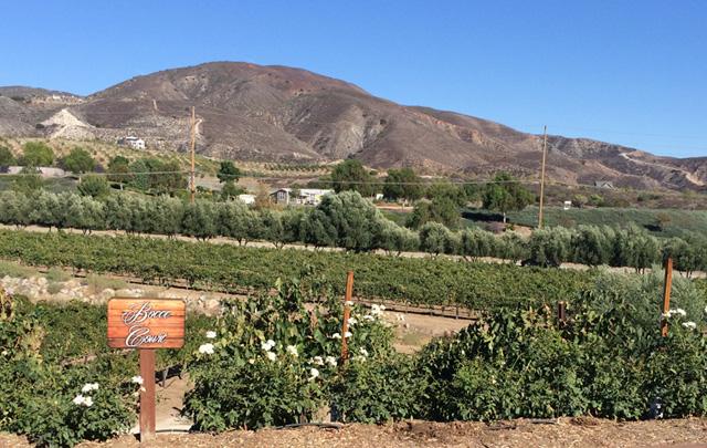 visiting-la-studentessa-pigra-in-temecula-southern-california