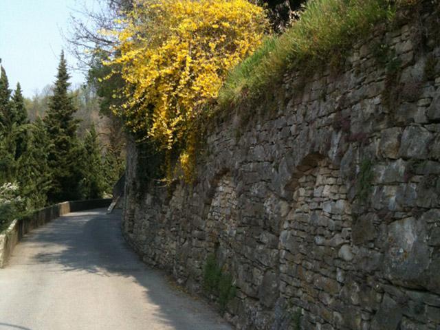 Elena_Bergamo_Passeggiata_StudentessaMatta2