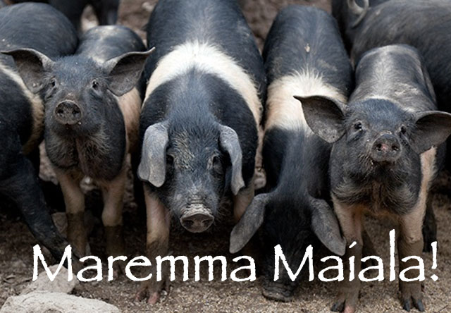 maremma-maiale-swear-like-italian-tuscan-expression